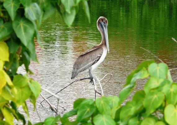 Belair Beach Hotel Birding Tour
